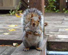 What about me? by La Belle Province, via Flickr