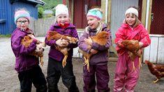 En, to, tre, fire... og fem. I Vollen barnehage i Bodø har de skaffet seg høner, noe både små og store gleder seg stort over.