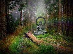 Fond d'écran gratuit de Bouddha dans la Forêt (Bouddha) à - o.k. U X