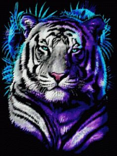 White Tiger with Blue Eyes Wallpaper | White Tiger Blue Glowing Eyes Wallpaper | iPhone | Blackberry