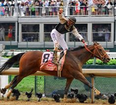 Mine That Bird (May 10, 2006) American thoroughbred racehorse bay gelding sired by Birdstone. He had a racing career in both Canada and the United States from 2008 to 2010. He is best known for pulling off a monumental upset (at 50-to-1 odds) by winning the Kentucky Derby in 2009 one of only nine geldings to win the Kentucky Derby and the second gelding to win the race since 1929.