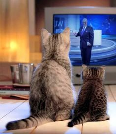 tv.jw.org  Even the family pets appreciate the programming. Great picture!