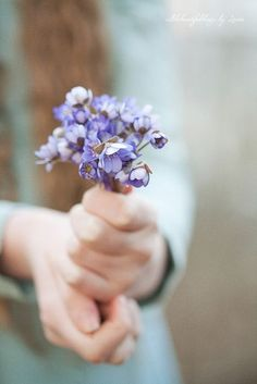 Photography by Loreta on Flickr http://www.flickr.com/photos/allthebeautifulthings