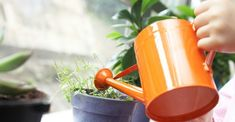 The 16 Best Healthy, Edible Plants to Grow Indoors- Starting a garden can be intimidating (or downright impossible if you don't have a yard), but that doesn't mean homegrown produce is out of the question. Growing Plants Indoors, Herbs Indoors, Growing Herbs, Growing Vegetables, Organic Gardening, Gardening Tips, Gardening Supplies, Container Gardening, Rosemary Plant