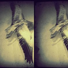 What a cool goose taxidermy drawing!