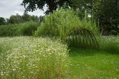 https://flic.kr/p/faasCY | Grow Wild Meadow at Kew Gardens | The stunning Grow Wild wild flower meadow at Kew Gardens is blooming and buzzing with colour and wildlife. July, 2013