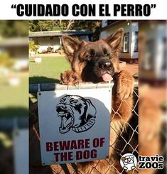 Scary Dogs, Funny Dogs, Funny Memes, Hilarious, Cute Puppies, Cute Dogs, Animals And Pets, Cute Animals, Beware Of Dog