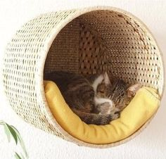 {DIY Cozy Cat Bed} Nail a large round basket to the wall and put a cozy blanket inside....Voila!