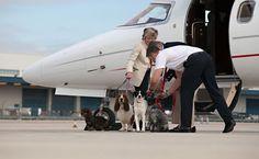 Companhia de voos fretados oferece serviços de luxo para animais de estimação
