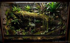 - Page 12 - Dendroboard Tree Frog Terrarium, Snake Terrarium, Aquarium Terrarium, Planted Aquarium, Reptile Room, Reptile Cage, Reptile Enclosure, Vivarium, Paludarium