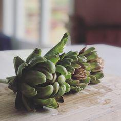 Hva kan man så i februar? Artichoke, Vegetables, Food, February, Artichokes, Essen, Vegetable Recipes, Meals, Yemek