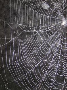 SpiderWeb_12.jpg (550×733)