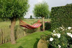 Salix of knotwilg
