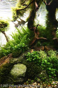 angelfish aquarium