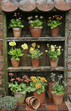 Idea Of Making Plant Pots At Home // Flower Pots From Cement Marbles // Home Decoration Ideas – Top Soop Shabby Chic Chairs, Shabby Chic Interiors, Beautiful Gardens, Beautiful Flowers, Plant Theatre, Primula Auricula, Shabby Vintage, Terra Cotta, Garden Projects
