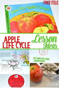 Apple Life Cycle Lesson Ideas. Learning about apples in kindergarten is a tradition. This informational book about apples is packed with apple facts. See how we integrate reading, writing, science, and math!