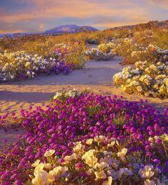 アンザ・ボレゴ砂漠州立公園、カリフォルニア州 アメリカ