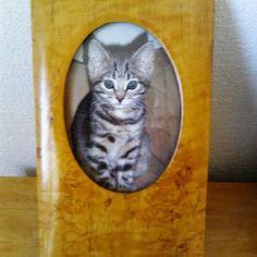 #valokuvakehys #koivuinen #kissa #kissanpentu