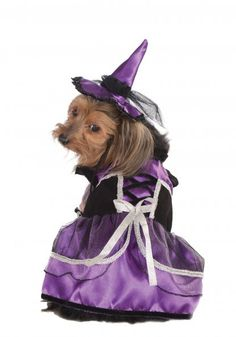 Purple Witch Dog Costume