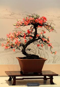 Bonsai- the perfect size tree Ikebana, Plantas Bonsai, Art Asiatique, Bonsai Garden, Bonsai Trees, Succulents Garden, Miniature Plants, Growing Tree, Plantation