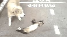 Oh My God. He's Dead... Why I Oughta! Click to watch gif