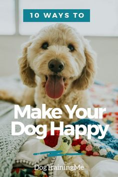 10 quick tips to make your dog happy. Most dogs are easily pleased and there are lots of things you can do to make them feel loved. Here are 10 easy ways to make your dog happier now! #makeyourdoghappy #happydog #dogcare #tipsforahappydog