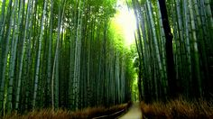 What to do in Kyoto? Bamboo