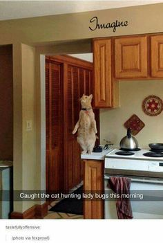 My cats the same way but with spiders