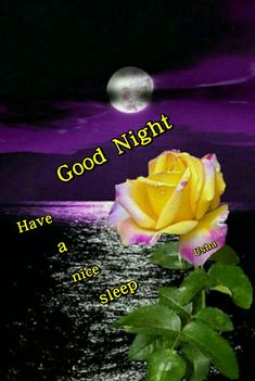 Good Afternoon, Good Morning, Happy Wednesday Pictures, Good Night Flowers, Good Night Sleep Tight, Good Night Blessings, Night Pictures, Good Night Quotes, Night Time