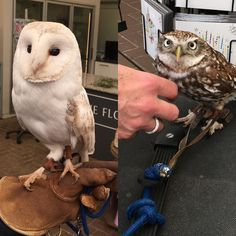 Come and see these lovely owls (and others) at Dutch Nursery today pop in and see us too traditional upholstery today! #stripeinteriors
