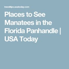 Places to See Manatees in the Florida Panhandle | USA Today