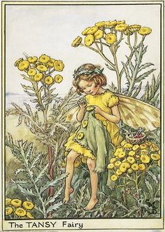 Illustration for the Tansy Fairy from Flower Fairies of the Wayside. A girl fairy sits amongst tansy flowers sewing a button on a jacket. Her sewing basket is beside her.  										   																										Author / Illustrator  								Cicely Mary Barker