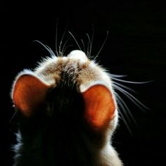 The beauty of Cat.