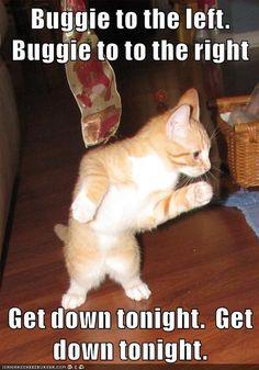 Disco or go home http://cheezburger.com/9023255296