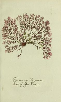 n80_w1150 (by BioDivLibrary)