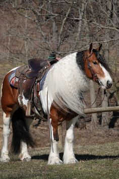 The Great American Ranch and Trail Horse Sale and Competition will offer some of the finest trail and ranch horses in the country. All The Pretty Horses, Horses For Sale, Ranch, Competition, Trail, Country, American, Animals, Guest Ranch