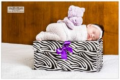 Our newborn princess props used zebra gift box with purple ribbon and matching hippo