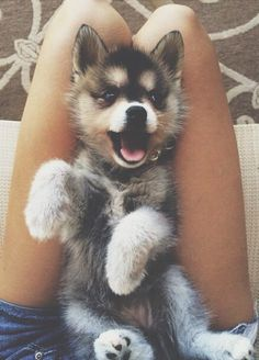 I WILL have a husky one day :) so cute