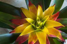 Plants, Ornamental Plants, Potting Soil, Ceiling Medallions, Nth Root, Exotic, Orchids, Flora, Plant
