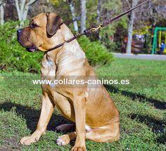 Collar de ahorque cuero natural para perros Cane Corso desobedientes que tiran de la correa - C97 (10 mm)