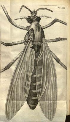 facsimilium: Robert Hooke's Micrographia, 17th Century