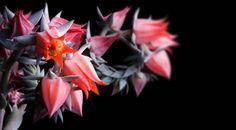 Flower Plant Background