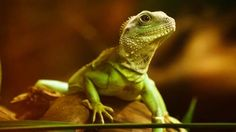 How to choose pet reptiles for sale?