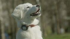 Fantechnology: Il tuo animale domestico è al sicuro con Vodafone ...