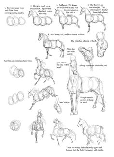 horse anatomy - how to draw a horse step by step - I have no hope of ever drawing a realistic horse, but this is kind of cool..