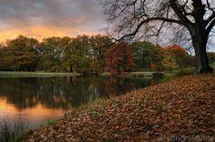 Branitzer Herbst von Drossel