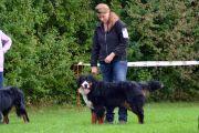 LG-Dietenhofen-Rosi Bell Rose, Jingle Bells, Dogs, Animals, Bernese Mountain Dogs, Doggies, Animais, Animales, Animaux