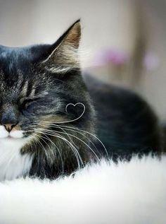 Cat love's moustache