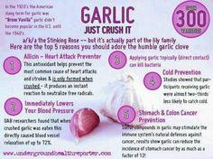 The amazing garlic!