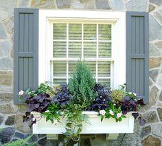 My Summer Window Boxes - Garden Plants Window Box Flowers, Flower Boxes, Window Planter Boxes, Planter Ideas, Garden Windows, Window Shutters, Blue Shutters, Garden Boxes, Outdoor Living